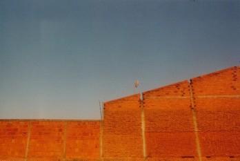 Thiago bortolozzo assolamentos 2001